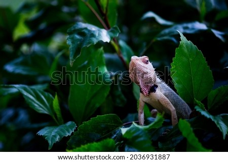 Garden Lizard resting on the flower plants in its natural environment Royalty-Free Stock Photo #2036931887
