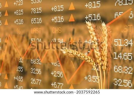 Diagram of rising food prices. Increase in the price of wheat seedson. Exchange quotes Royalty-Free Stock Photo #2037592265