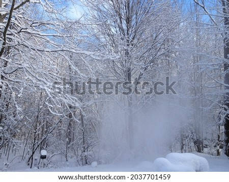 tree trunks covered in thick snow