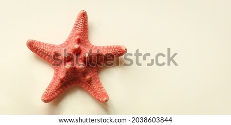Starfish is marine echinoderm with five arms. Undersides of arms bear tube feet for locomotion and, in predatory species, for opening shells of mollusks. Royalty-Free Stock Photo #2038603844