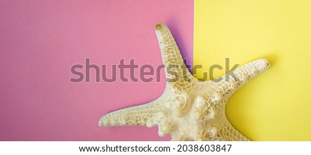 White starfish is marine echinoderm with five arms. Undersides of arms bear tube feet for locomotion and, in predatory species, for opening shells of mollusks. Royalty-Free Stock Photo #2038603847