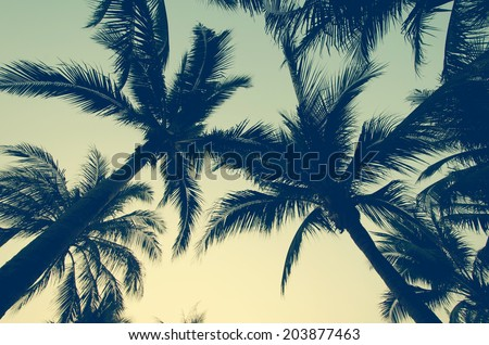 Palm trees on the beautiful sunset background. Royalty-Free Stock Photo #203877463