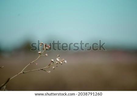 Magnolia flower exfoliation weathering, High Res Stock Image