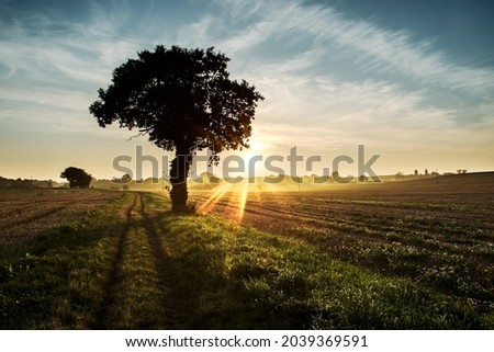 Moody sunset across rural agricultural landscape with silhouetted tree. Beautiful fairytale scene of farmland in Norfolk UK. Stunning dark atmospheric picture book view of country path at dusk or dawn