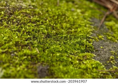 Green moss. #203961907