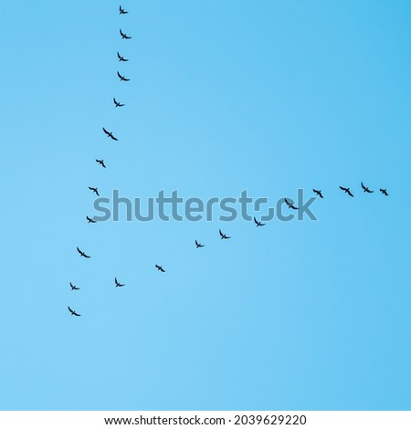 Flock of wild birds flying in a wedge against blue sky. The concept of avian migratory Royalty-Free Stock Photo #2039629220