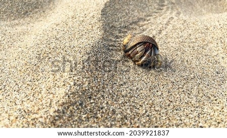 Hermit crab walking through the sand on the beach. Royalty-Free Stock Photo #2039921837