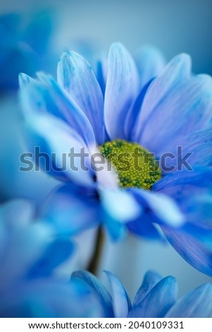 Blue flower in macro close-up. Abstract macro fine art. Wallpaper, postcard, etc. Royalty-Free Stock Photo #2040109331
