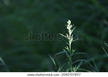 A closeup of green vascular plants in a field Royalty-Free Stock Photo #2040707897