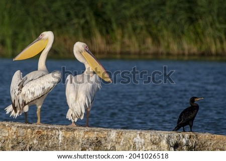 A closeup of white Pelecaniformes waterbirds and a sea on the background Royalty-Free Stock Photo #2041026518