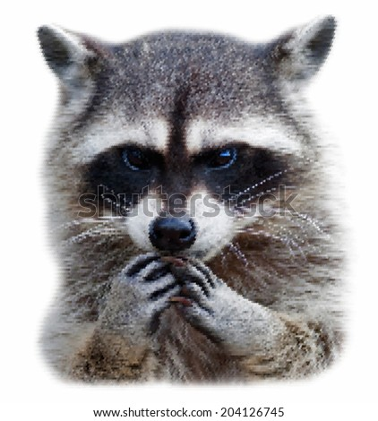 Head and hands of a cute and cuddly raccoon, that can be very dangerous beast. Unusual beauty of the wildlife. Human like expression on the animal face. Amazing short-grained scaly vector image. #204126745