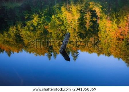 tranquil water surface with reflection from October vibrant trees foliage and sunken snag in lake picturesque local nature scenic view background concept photography, soft focus Royalty-Free Stock Photo #2041358369