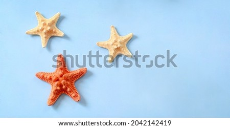 Starfishes are marine echinoderm with five arms. Undersides of arms bear tube feet for locomotion and, in predatory species, for opening shells of mollusks. Royalty-Free Stock Photo #2042142419