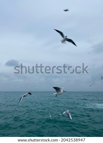 Seagulls in flight over beautiful winter sea.The Black Sea in Odesa city, Ukraine. Seething ice waves. Cold weather. Poetic picture of flying birds. Romantic atmosphere. Free soul
