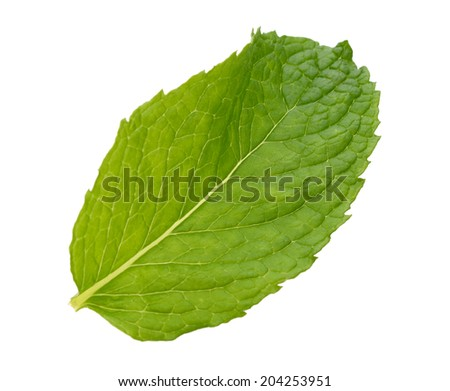 A single mint leaf isolated white #204253951