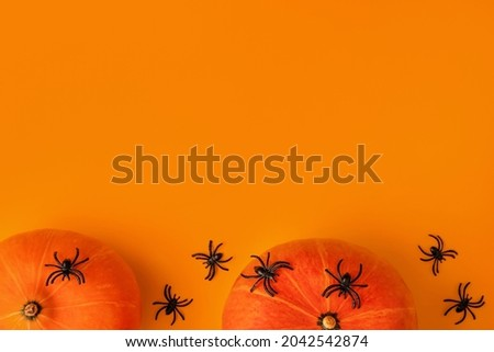 Halloween composition of pumpkins and cartoon black spiders on orange background. Bright holiday backdrop for your design. Creative trendy flat lay with place for text.