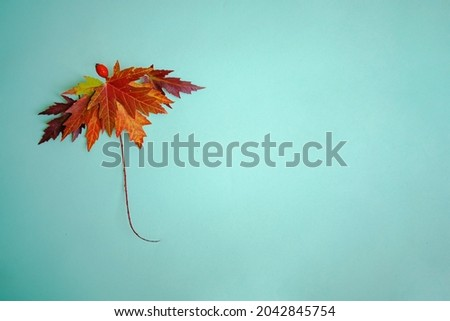 Autumn, fall concept. Creative concept with umbrella made of autumn leaves
