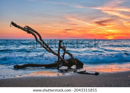 ld wood trunk snag in water at tropical beach on beautiful sunset. Nature seascape background. Sun setting in waves of Aegean sea. Agios Ioannis beach, Milos island, Greece Royalty-Free Stock Photo #2043311855