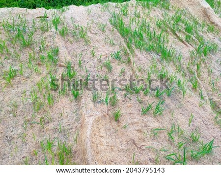 Permanent slope protection with grass using the hydroseed method. The grass used to stabilizes the slope structure and prevent slope erosion. Effective and less maintenance.  Royalty-Free Stock Photo #2043795143