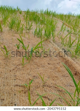 Permanent slope protection with grass using the hydroseed method. The grass used to stabilizes the slope structure and prevent slope erosion. Effective and less maintenance.  Royalty-Free Stock Photo #2043795152