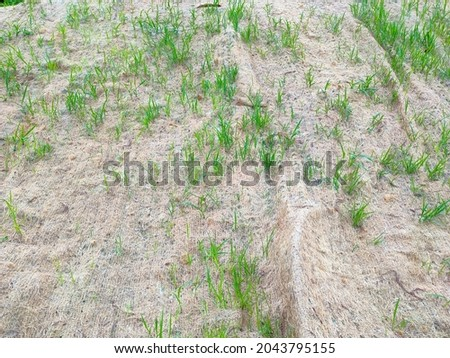 Permanent slope protection with grass using the hydroseed method. The grass used to stabilizes the slope structure and prevent slope erosion. Effective and less maintenance.  Royalty-Free Stock Photo #2043795155