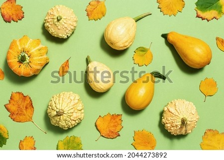Flat lay autumn composition made of decorative pumpkins and yellow leaves on green color paper background. Fall harvest thanksgiving halloween creative top view.