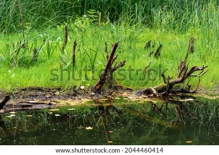bog shore with water, grass and snags Royalty-Free Stock Photo #2044460414