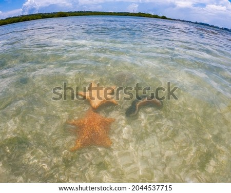 Starfish or sea stars are star-shaped echinoderms belonging to the class Asteroidea Royalty-Free Stock Photo #2044537715