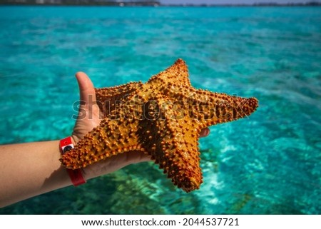 Starfish or sea stars are star-shaped echinoderms belonging to the class Asteroidea Royalty-Free Stock Photo #2044537721