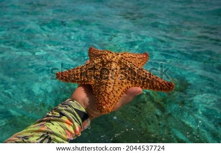 Starfish or sea stars are star-shaped echinoderms belonging to the class Asteroidea Royalty-Free Stock Photo #2044537724