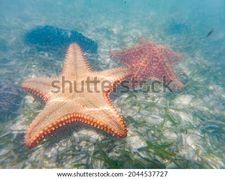 Starfish or sea stars are star-shaped echinoderms belonging to the class Asteroidea Royalty-Free Stock Photo #2044537727