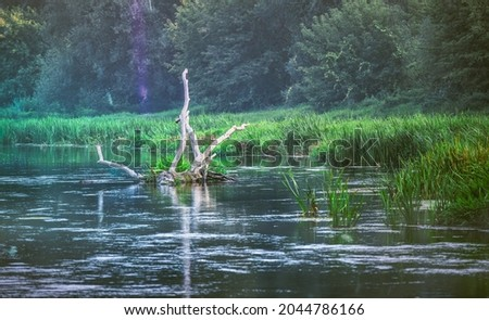 A wooden snag sticking out of the river with a hard flow against the green trees in the distance. Autumn scenery in the setting sun. Royalty-Free Stock Photo #2044786166