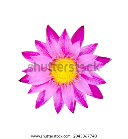 Die-cut picture, lotus flower blooming