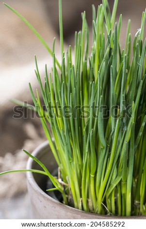 Fresh Chive plant on vintage background (close-up shot) #204585292