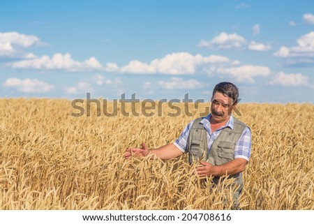 farmer standing in a wheat field, looking at the crop #204708616