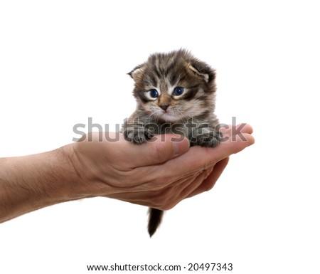 small kitten on a hand #20497343