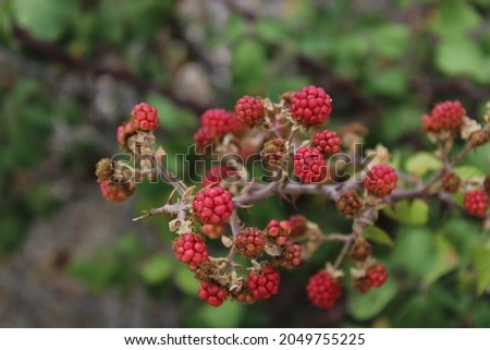 Natural fruit at the mines of Vavdos Royalty-Free Stock Photo #2049755225