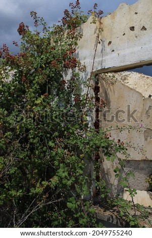 Old destroyed buildings at the mines of Vavdos, overtaken by nature Royalty-Free Stock Photo #2049755240