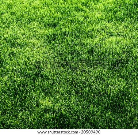 Green Grass background texture #20509490