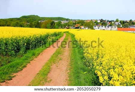 Rural road through a blooming field. Countryside rural road. Rural field road. Road in countryside Royalty-Free Stock Photo #2052050279