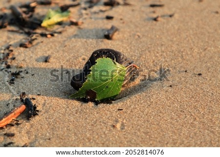 Green leaf on the stone on a beach sand. High quality photo Royalty-Free Stock Photo #2052814076