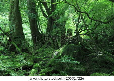 An Image of Forest Of Princess #205317226
