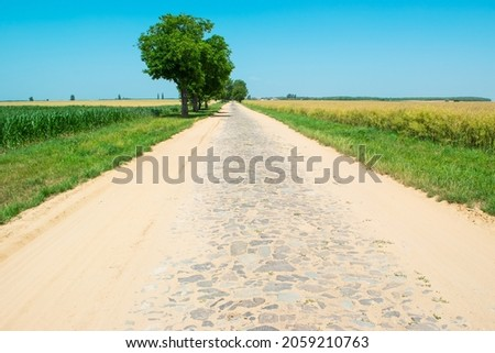 Paving stones an very old road sprinkled with sand between agricultural fields. Sunny summer rural landscape with stone road and single trees. Royalty-Free Stock Photo #2059210763