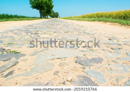 Paving stones an very old road sprinkled with sand between agricultural fields. Sunny summer rural landscape with stone road and single trees. Royalty-Free Stock Photo #2059210766