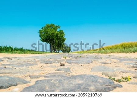 Paving stones an very old road sprinkled with sand between agricultural fields. Sunny summer rural landscape with stone road and single trees. Royalty-Free Stock Photo #2059210769