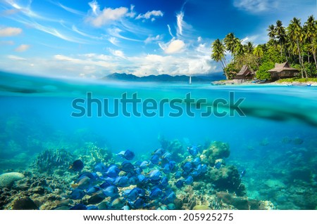 Coral reef, colorful fish and sunny sky shining through clean ocean water.. Summer holiday concept. Coral reef, colorful fish and sunny sky shining through clean ocean water.High res