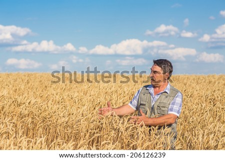 farmer standing in a wheat field, looking at the crop #206126239