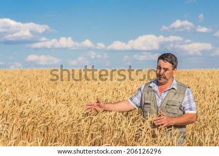 farmer standing in a wheat field, looking at the crop #206126296