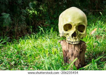 Still life, skull in the backyard and log in the park #206235454