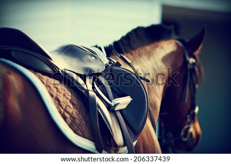 Saddle with stirrups on a back of a horse Royalty-Free Stock Photo #206337439
